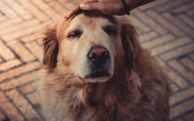 Pet Ownership